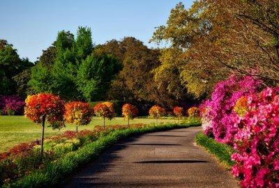 Ten landscaping tips for landscaping your garden