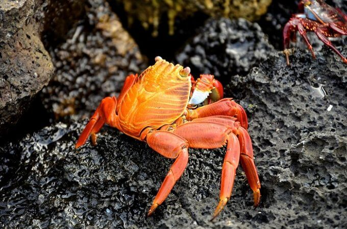 Why King Crabs good for Your Health?