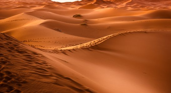 Best Desert Safari in Dubai With Affordable Price