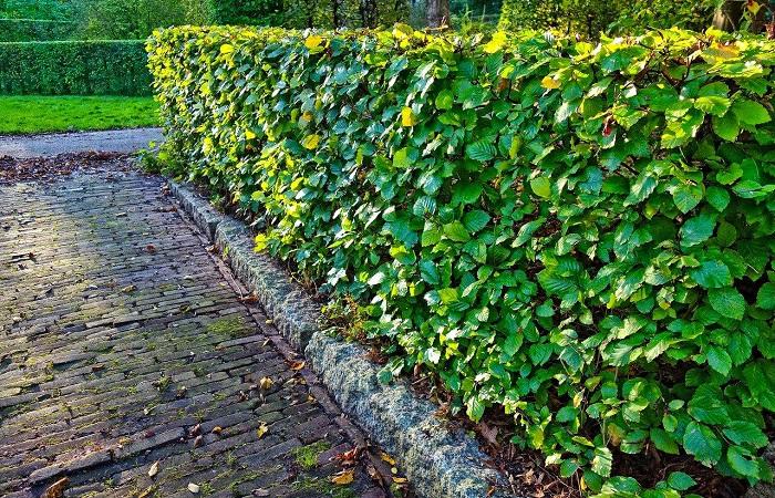 Necessities of Hedge Maintenance